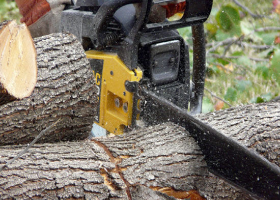 Chainsaw Safety Training Program